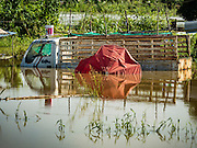 30 SEPTEMBER 2016 - SAI NOI, AYUTTHAYA, THAILAND:  A construction truck under water in a field in Sai Noi. The Chao Phraya River, the largest river that runs through central Thailand, has hit flood stage in several areas in Ayutthaya and Ang Thong provinces. Villages along the river are flooded and farms are losing their crops due to the flood. This is the same area that was devastated by floods in 2011, but the floods this year are not expected to be as severe. The floods are being fed by water released from upstream dams. The water is being released to make room for heavy rains expected in October.     PHOTO BY JACK KURTZ