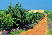 country road and red soil