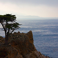 USA, California, Monterey. The Lone Cypress of Monterey.