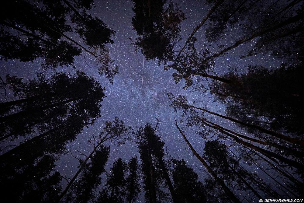 Looking upwards through treetops toward a nighttime sky of stars.
