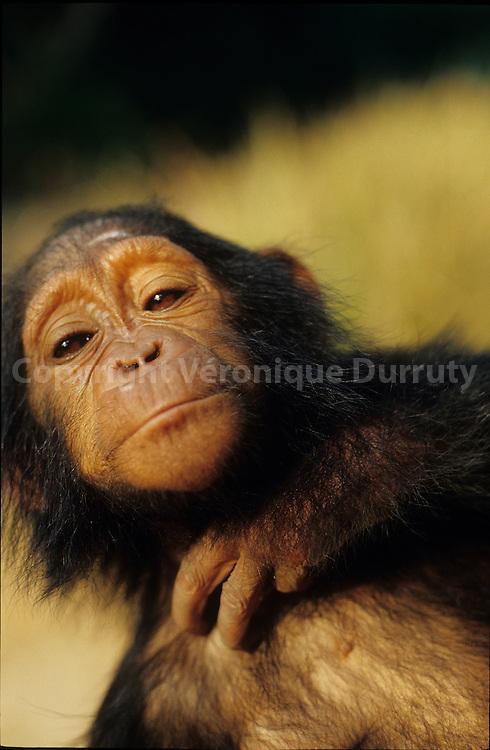 Counkouati Douli national Park, Congo