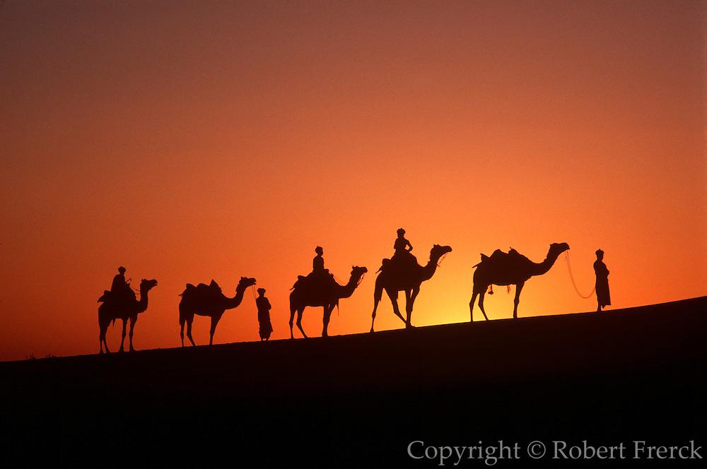 INDIA, RAJASTHAN camel caravan in the Great Thar Desert at sunset near Jaisalmer