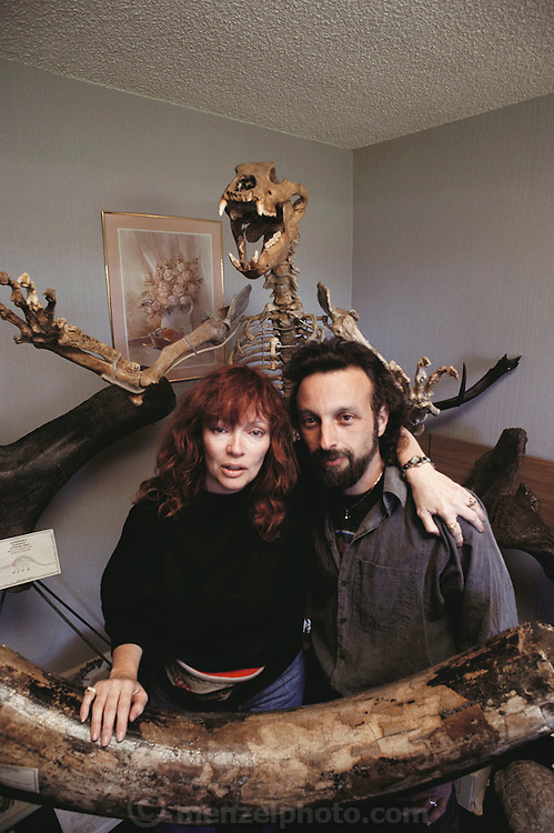 April and Barry James, commercial paleontologists, holding the tusk of a Siberian Mammoth. Just behind them is a prepared and mounted skeleton of a Cave Bear (Ursus spelaeus), which was widespread throughout Europe in the Pleistocene Period about 2 million years ago. A skeleton in this condition can be purchased for about $35,000. Academics often frown upon such collectors, but amateurs have discovered many new species across the world. Incisor tooth comes from Siberian Mammoth. MODEL RELEASED (1991)