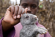 A young farmer shows off one of his rabbits atMable Mutabazi's (his mother) farm in Uganda. Rabbits are bred for meat. Mable is a trainee farmer with the Kulika project.