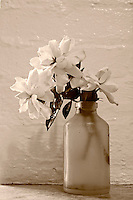 Black-and-white photo of cut gardenia flower in an old bottle on a window ledge.