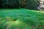 green grass and dired leaves in mountain field