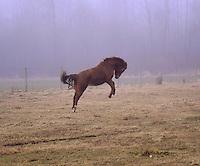pony bucking in field