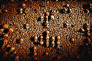 Catacombs, with millions of human bones removed from Paris graveyards. Paris, France.