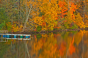Acadian forest in autumn foliage reflected in the Saint John River with dock. <br />