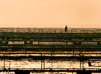A lone fishfarm worker surveys his fish-pens in the early morning light.  Nootka sound area, Northern Vancouver Island, British Columbia, Canada.