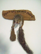 Truly Bizarre Taxidermy<br /> In the taxidermy world, anything can happen.<br /> ©exclusivepix