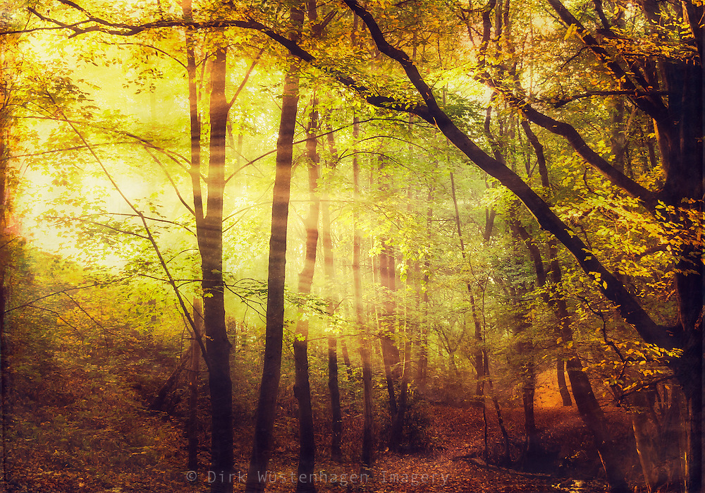 Morning light in a misty fall forest<br />