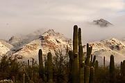 Snow covers the Santa Catalina Mountains, Sonoran Desert, Coronado National Forest, Tucson, Arizona, USA. (PHOTO: Snow covers the Santa Catalina Mountains, Coronado National Forest, Tucson, Arizona, USA. (PHOTO: ©Norma Jean Gargasz)