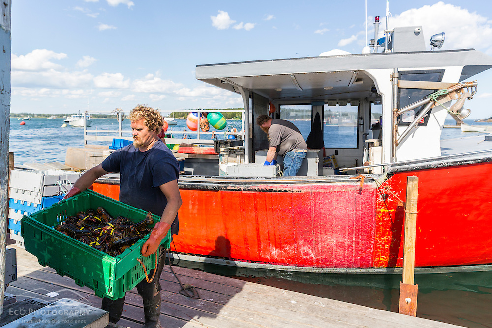 Dock worker Gary Emerson unloads lobster from Captain Richard Smith's boat, 'Bad Behavior',  on the wharf at Great Wass Lobster in Beals, Maine.