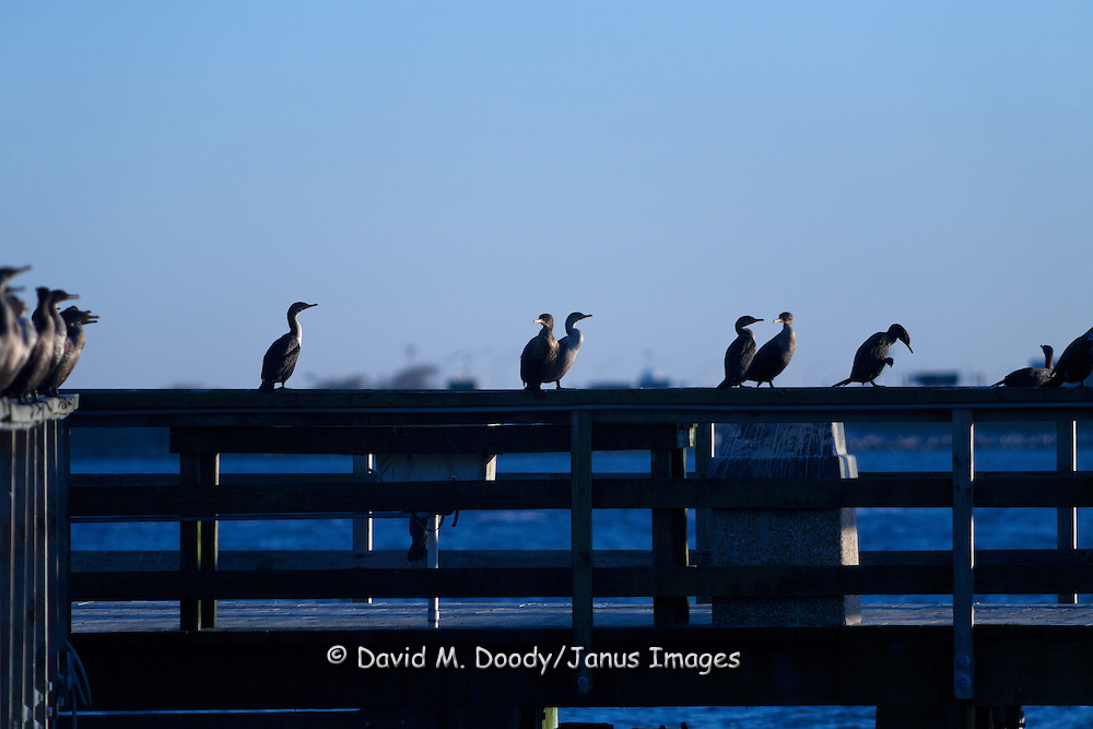 Birds appear to be socializing  on pier at Fort Monroe, Hampton, Virginia