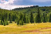 Summer landscape from Golyam Beglik lake in Rhodope Mountains