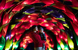 © Licensed to London News Pictures. 30/11/2018. London, UK. Laura Jones and baby Lorenzo look up at the illuminated Wisteria Walk at RHS Wisley Gardens. Trees and plants have been illuminated at Royal Horticulture Society Wisley Gardens for the Christmas Glow seasonal event. Hundreds of different lights can be seen when following the trail throughout the gardens opening 1 December 2018 2 January 2019. Photo credit: Peter Macdiarmid/LNP