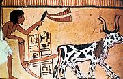 Tomb of Sennutem (Sennedjem) near Deir el-Medina, the Workers' Village.  Sennutem ploughing with cattle.