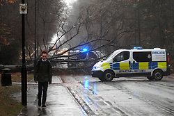 Licensed to London News Pictures 05/12/2013 A Fallen tree on Hookstone Drive, Harrogate, N Yorks, a few hundred yards from St John Fisher Catholic High School. Bad weather rid crossing th north of England and Scotland today 5th December 2013. Photo Credit: Sam Atkins/LNP