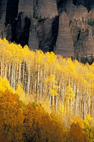 Owl Creek Pass, Cimarron Mountains, aspen trees