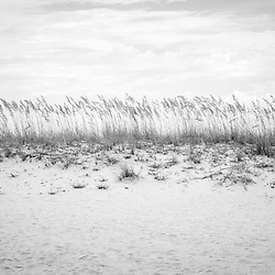 Pensacola Beach Florida beach grass beachscape black and white photo. Pensacola Beach is a coastal city in the Emerald Coast area of the Southeastern United States. Photo is high resolution. Copyright ⓒ 2018 Paul Velgos with All Rights Reserved.