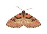70.057 (1735)<br /> Ruddy Carpet - Catarhoe rubidata