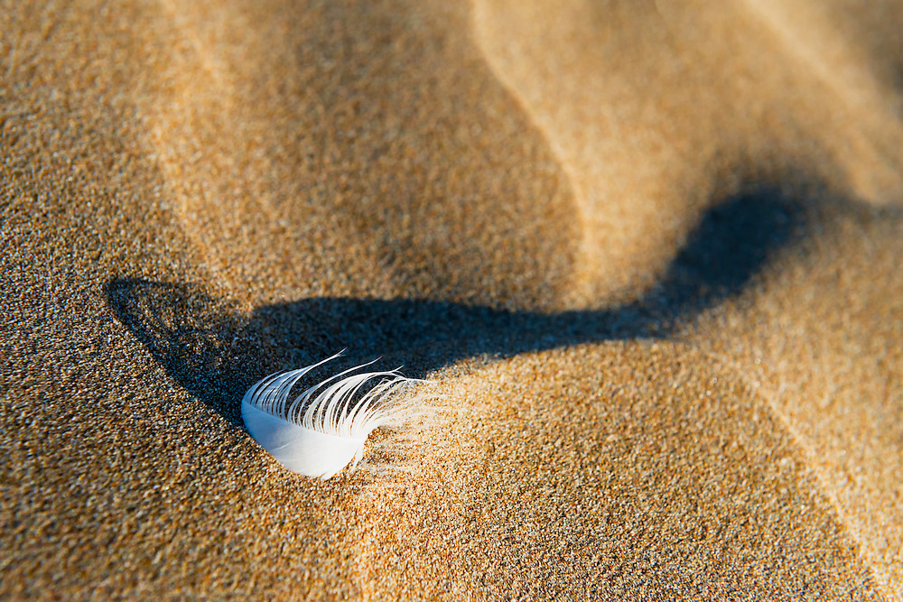Bird feather in desert sand at Lagoon Khenifiss (Lac Naila), Morocco