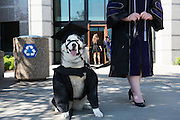 Law Commencement Ceremony at the McCarthey Athletic Center. (Photo by Gonzaga University)