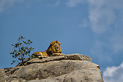 &quot;King&quot; is featured in the March/April 2014 issue of Wildlife Photographic Magazine.<br />