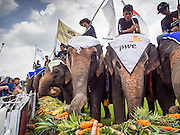 "28 AUGUST 2014 - BANGKOK, THAILAND: Elephants at the fruit buffet at the King's Cup Elephant Polo Tournament at VR Sports Club in Samut Prakan on the outskirts of Bangkok, Thailand. The tournament's primary sponsor in Anantara Resorts. This is the 13th year for the King's Cup Elephant Polo Tournament. The sport of elephant polo started in Nepal in 1982. Proceeds from the King's Cup tournament goes to help rehabilitate elephants rescued from abuse. Each team has three players and three elephants. Matches take place on a pitch (field) 80 meters by 48 meters using standard polo balls. The game is divided into two 7 minute ""chukkas"" or halves.     PHOTO BY JACK KURTZ"
