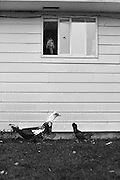 Shelly feeds the chickens and ducks by tossing bread chunks out the kitchen window. Totally free range, the birds flock to the window when it opens every morning.