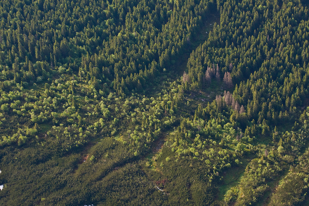 Aerial view of border between mountain forest with Spruce (Picea abies) and Ash (Sorbus aucuparia) and Dwarf pine (Pinus mugo) zone in afternoon light. Western Tatras, Slovakia. June 2009. Mission: Ticha