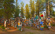 Sign Post Forest<br />