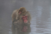 Monkey and Baby in pool