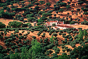 PORTUGAL, ALENTEJO, CENTRAL REGION Agriculture: a landscape vista of olive groves and farms