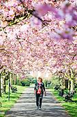 2014_04_10_Blossom_SSI