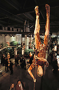 """The Pole-vaulter,"" a piece from Gunther von Hagens' Body Worlds exhibits. Body Worlds is a traveling exhibit of real, plastinated human bodies and body parts. Von Hagens invented plastination as a way to preserve body tissue and is the creator of the Body Worlds exhibits.."
