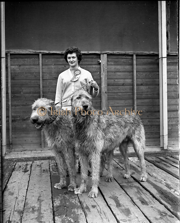 17/03/1960<br /> 03/17/1960<br /> 17 March 1960<br /> Irish Kennel Club Dog Show at the RDS, Ballsbidge, Dublin.