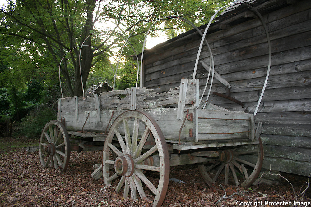 An abandoned covered wagon half buried in leaves sitting next to an old shed in the woods.