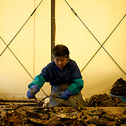 May 29, 2013 - Togura, Japan: A local woman prepares fishing nets in a workshop owned by Togura's fishing community. Togura, a small fishing village in Minami Sanriku, was vastly destroyed by the 2011 tsunami that hit the northeast coast of Japan. Thousands died and hundreds of families lost their houses, business and boats. The recovering community works now in a cooperative system where the few remaining boats, spared by the tsunami, are shared by all. (Paulo Nunes dos Santos)
