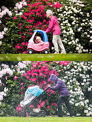 © Licensed to London News Pictures. 18/05/2016. Leeds UK. YESTERDAY & TODAY WEATHER COMPARISON. Top picture taken 17/05/2016 shows a lady pushing a child through Temple Newsam park in the sunshine yesterday. Bottom picture taken 18/05/2016 shows a woman pushing a child through the rain today at Temple Newsam park in Leeds. Photo credit: Andrew McCaren/LNP