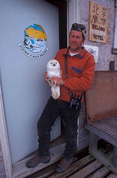 Snowy Owl, (Nyctea scandiaca) Denver Holt with injured owl. Barrow, Alaska.