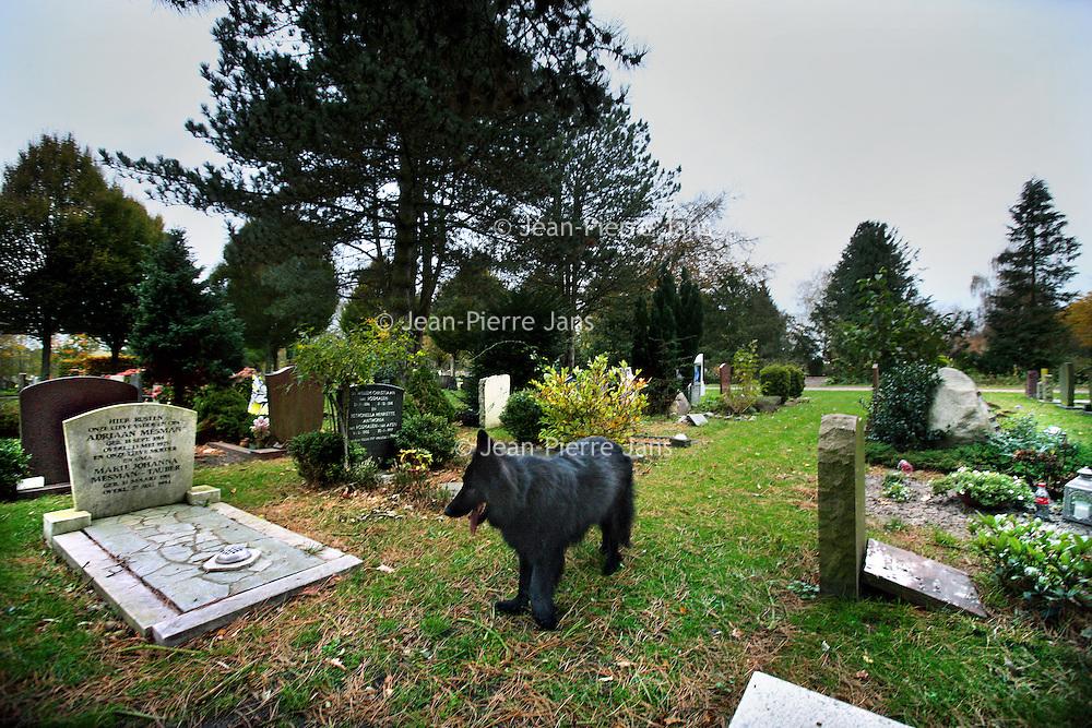 Nederland, Bergen , 7 november 2013.<br /> begraafplaats van Bergen.<br /> Op de voorgrond de grafsteen van Lucebert.<br /> Foto:Jean-Pierre Jans