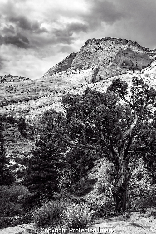 Black & White image of a summer storm  moving over Zion's canyons