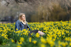 © Licensed to London News Pictures. 07/02/2020. London, UK. JAYNIE CORLISS sitting with the Daffodils as they start to bloom in St James's Park. Photo credit: Dinendra Haria/LNP