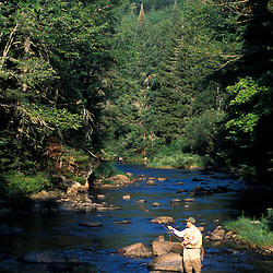 Fly-fishing on Paul Stream on land currently owned by Hancock Timber.  Northern Forest. (CT River.)  Maidstone, VT