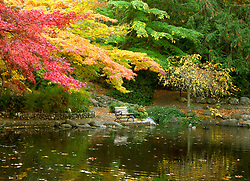 Brilliant fall color overhangs the Lower Duck Pond and bench in Lithia Park in the heart of Ashland, Oregon, USA.