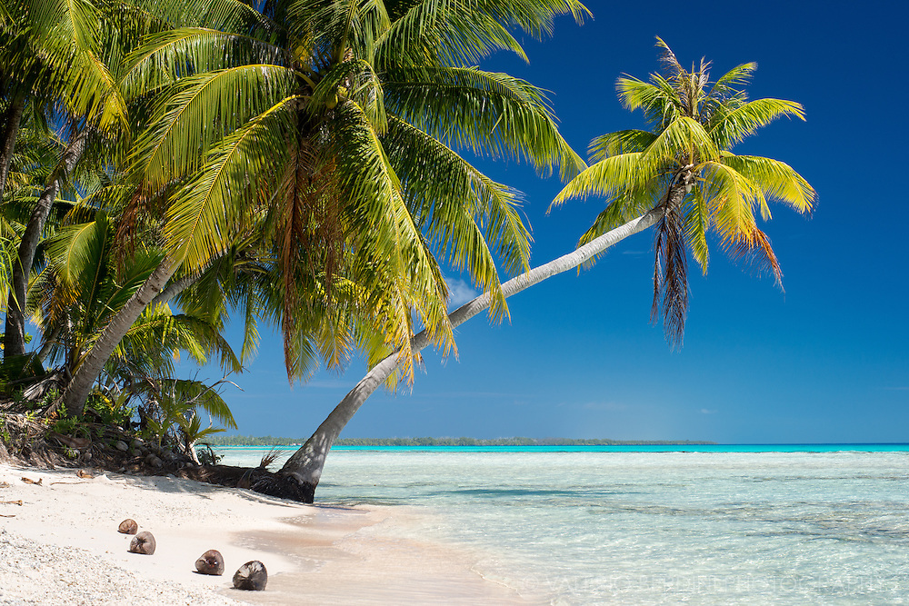 Rangiroa is an atoll of the tuamoto archipelago, a circular strip of sand and coconout trees leaning over crystalline waters.