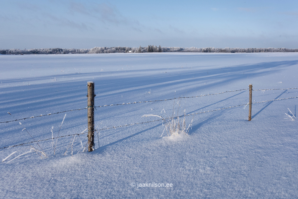 Rural winter landscape. Barbed wire fence posts in snowy field.