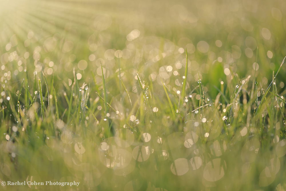 &quot;About Light&quot;<br />
